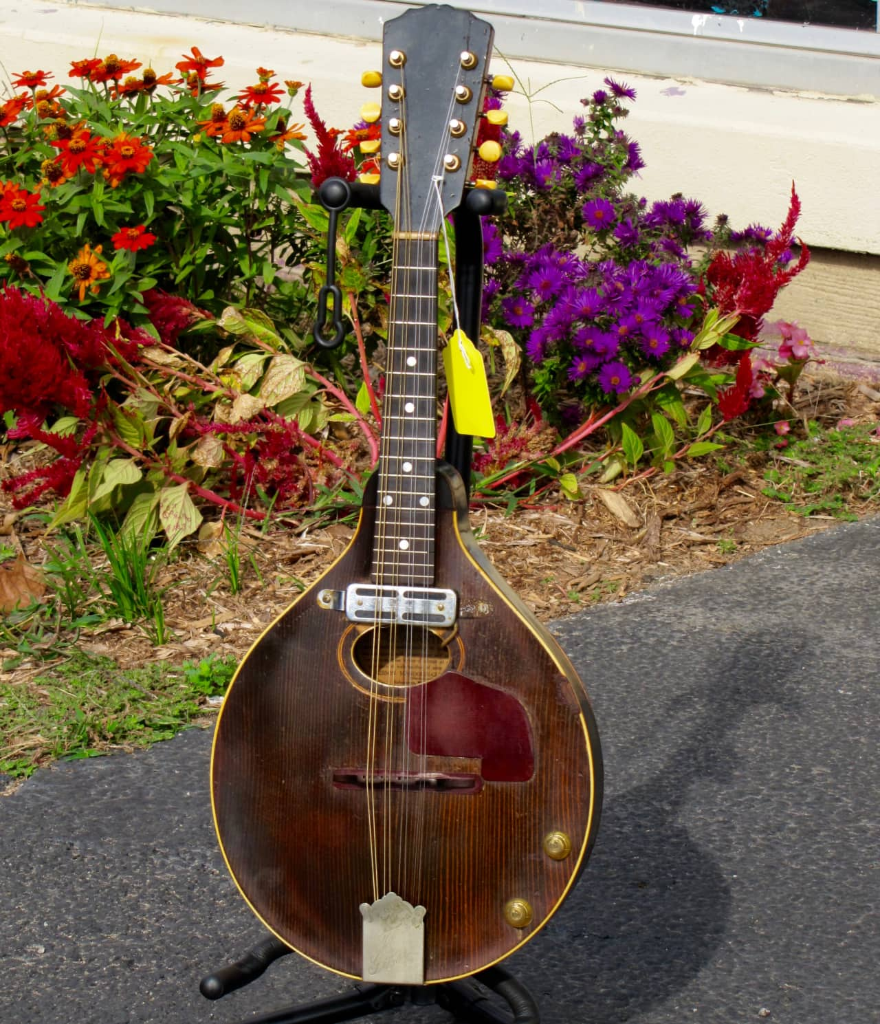 Vintage gibson mandolins know something